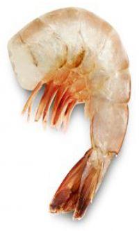 mid-size shrimp photot